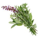 Oil of Oregano Health Benefits